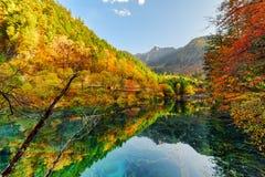 秋天森林意想不到的看法在五Flower湖反射了 库存图片