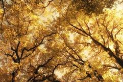 秋天森林摘要 库存照片