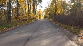 秋天森林旅行乘在路的汽车在秋天 4K 股票视频