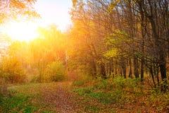 秋天森林明亮和五颜六色的风景有用叶子盖的足迹的 库存照片
