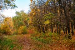 秋天森林明亮和五颜六色的风景有用叶子盖的足迹的 库存图片