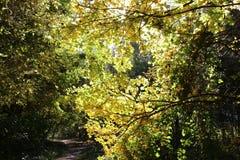 秋天森林是美丽的在黄色叶子 库存照片