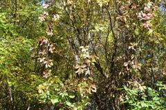 秋天森林是美丽的在黄色叶子 图库摄影