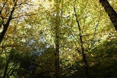 秋天森林是美丽的在黄色叶子 免版税库存照片