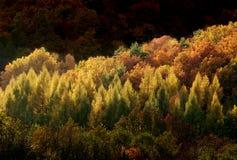 秋天森林本质 免版税库存照片