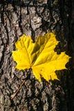 秋天森林标志 免版税库存图片