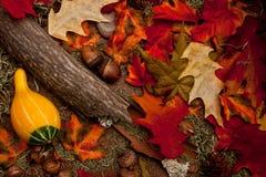 秋天森林楼层 库存照片