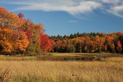 秋天森林横向 免版税库存照片