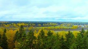 秋天森林橙黄色红颜色鸟瞰图直升机寄生虫在俄罗斯 股票视频