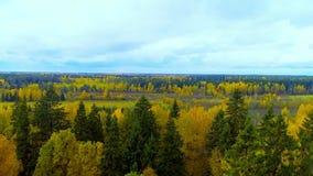 秋天森林橙黄色红颜色鸟瞰图直升机寄生虫在俄罗斯 影视素材