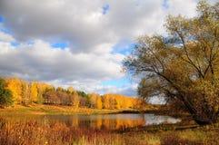 秋天森林池塘 免版税图库摄影