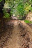 秋天森林泥泞的山沟路 免版税图库摄影