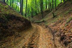 秋天森林泥泞的山沟路 免版税库存照片