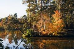 秋天森林湖 免版税库存照片