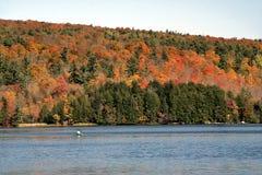 秋天森林湖 库存图片