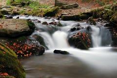 秋天森林瀑布 免版税库存照片