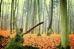秋天森林照片  免版税库存照片