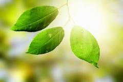 秋天森林留下杉木给木头 免版税库存图片