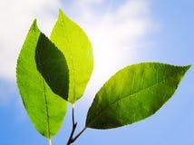 秋天森林留下杉木给木头 免版税库存照片