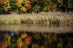 秋天森林的反射在湖 库存照片