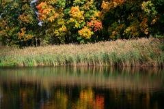 秋天森林的反射在湖 免版税库存照片
