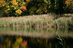 秋天森林的反射在湖 免版税图库摄影