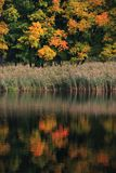 秋天森林的反射在湖 免版税库存图片