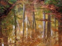 秋天森林的反射在水中 免版税库存图片