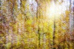 秋天森林的抽象图象 库存照片