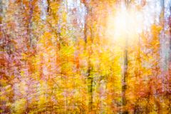 秋天森林的抽象图象 免版税库存图片
