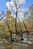 秋天森林的河12 免版税库存照片
