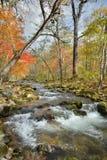 秋天森林的河10 免版税图库摄影