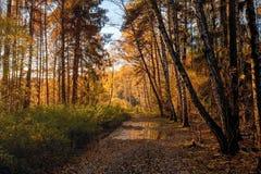 秋天森林的看法在10月 免版税库存图片