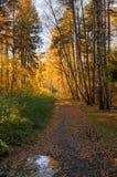 秋天森林的看法在10月 免版税库存照片