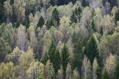 秋天森林的顶视图 库存照片