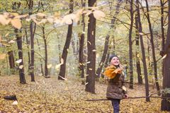 秋天森林秋天心情 有秋天花束的小女孩  免版税库存图片