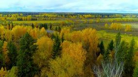 秋天森林秋天明亮的橙黄色红颜色空气视图直升机寄生虫 股票视频