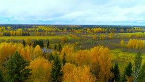 秋天森林秋天明亮的橙黄色红颜色空气视图直升机寄生虫 股票录像