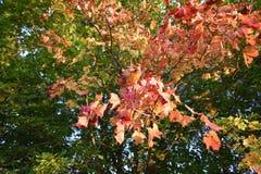 秋天森林秋天森林秋天树的颜色 免版税库存照片