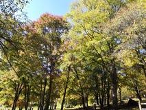 秋天森林红色枫叶 免版税库存照片