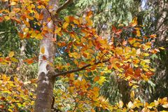 秋天森林细节 免版税库存图片