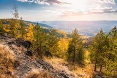 秋天森林美丽的景色  库存图片
