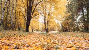 秋天森林美好的背景,明亮的叶子的公园 路在一个晴朗的下午的森林里 绿色桔子 免版税库存照片