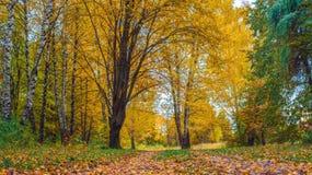 秋天森林美好的背景,明亮的叶子的公园 路在一个晴朗的下午的森林里 绿色桔子 库存图片