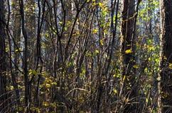 秋天森林背景的图表资源 图库摄影