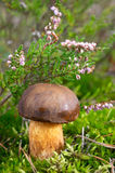 秋天森林蘑菇 免版税库存照片