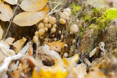 秋天森林蘑菇 免版税图库摄影