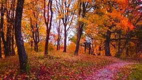秋天森林蚂蚁微小的路, Buivydu piliakalnis土墩 免版税库存照片