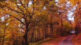 秋天森林蚂蚁微小的路 免版税库存图片
