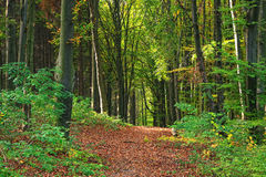 秋天森林路径 库存图片
